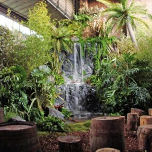 Location de décoration jungle tropicale