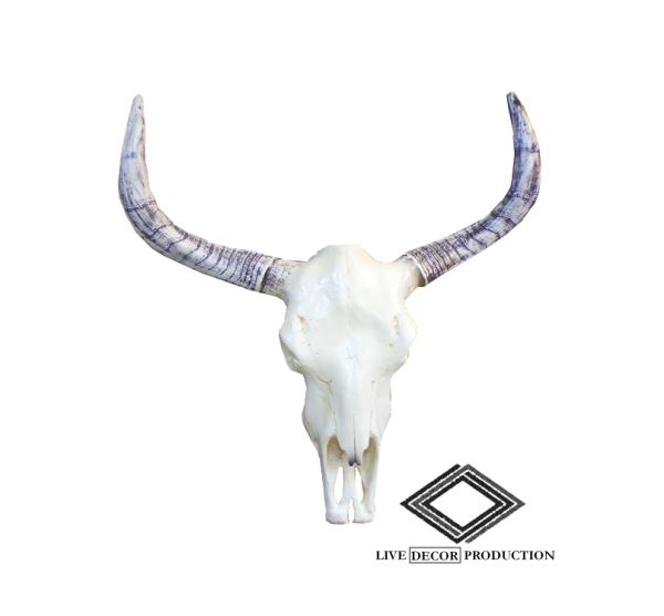 location crâne de taureau