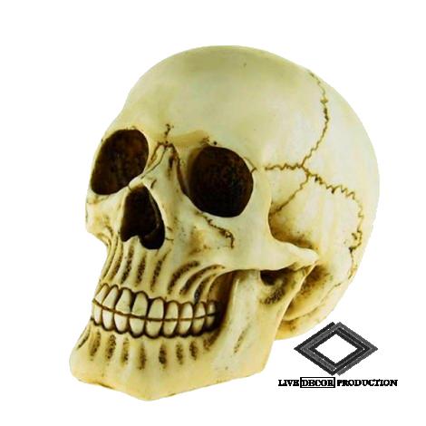 Location de crâne de squelette