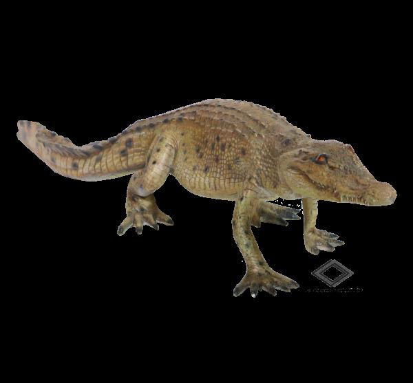 Location d'alligator