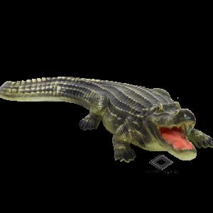Location de crocodile