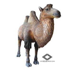 Location de chameau en fibre de verre