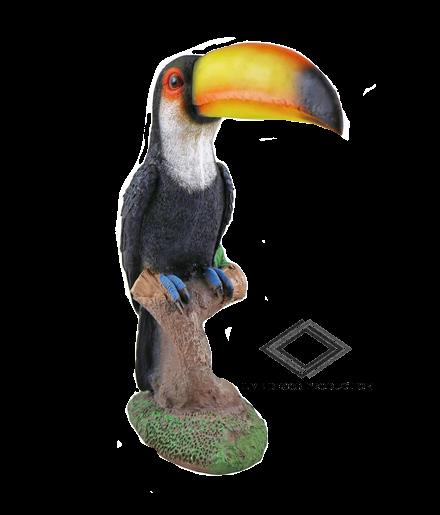 Location de toucan
