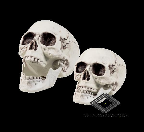 Location de crâne tête de mort