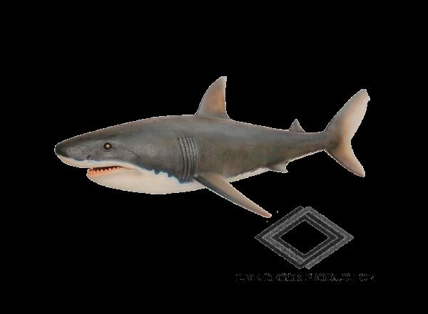 Location de requin